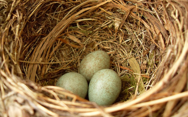 Bird nest removal services