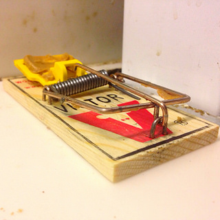 Set mouse trap baited with peanut butter