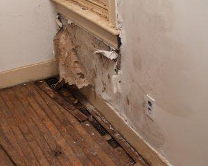 mold-damage