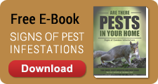 Signs of Pest Infestations E-Book