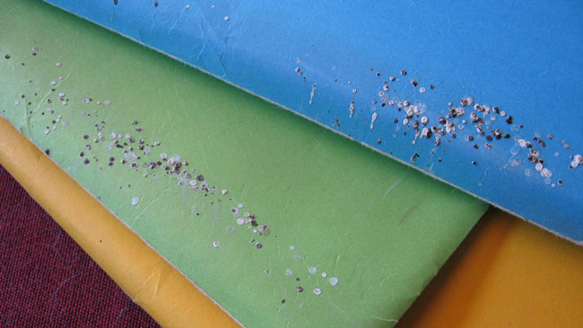 How to Clean Up Spider Droppings…Maybe - Colonial Pest Control
