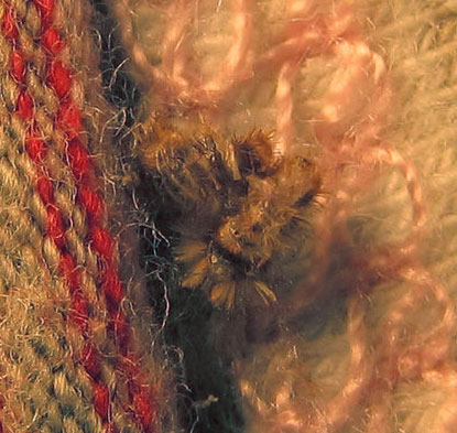 What Does Carpet Beetle Damage Look Like