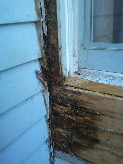Wood rot on windowsill