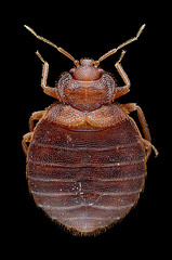 BedBug - Brought Bed Bugs Home from Vacation