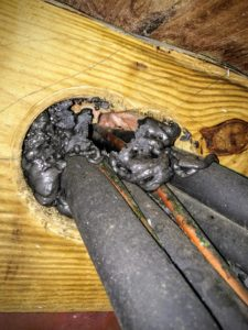 How Are Mice Getting Into My House? - Colonial Pest Control