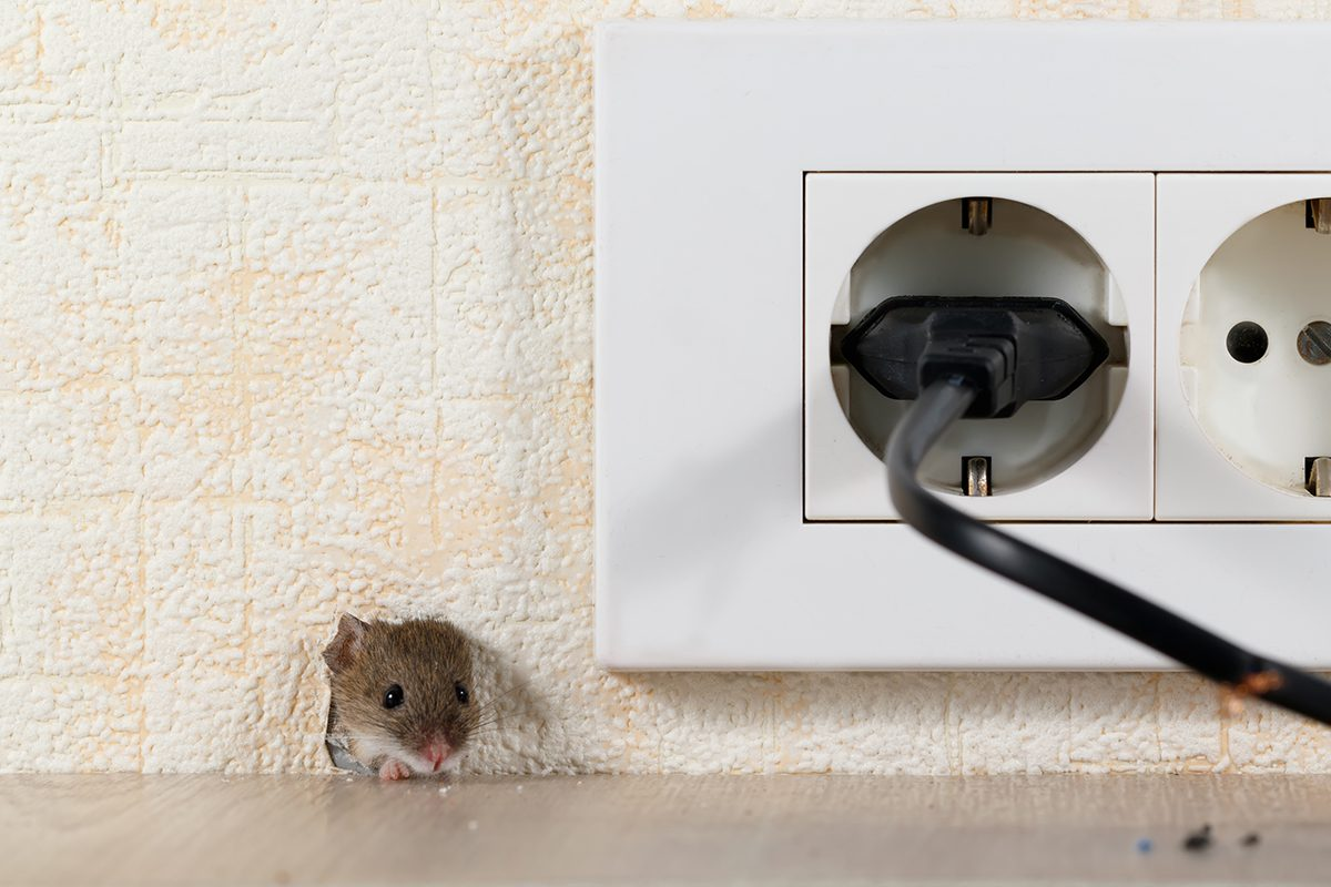Rodents in the Home