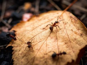 Autumn in New England is officially here! What does that mean for pests?