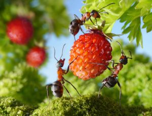 ant-on-fruit